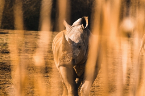Poaching: a moral issue and a failure of the market
