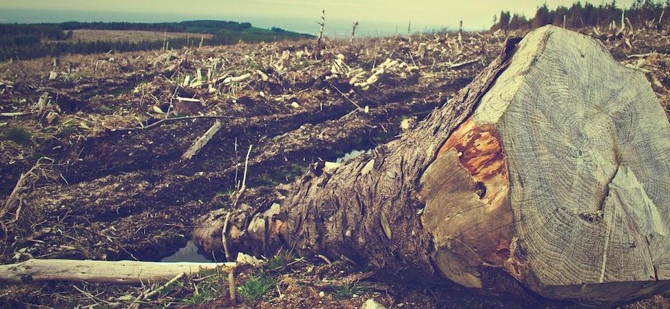 'Anthropocene: The Human Era'