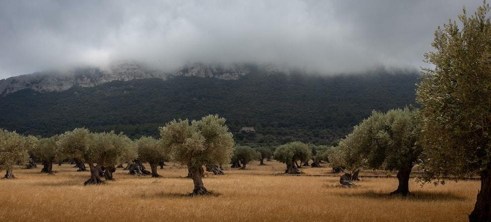 Back to the Olive Tree: Toward a Mediterranean theology